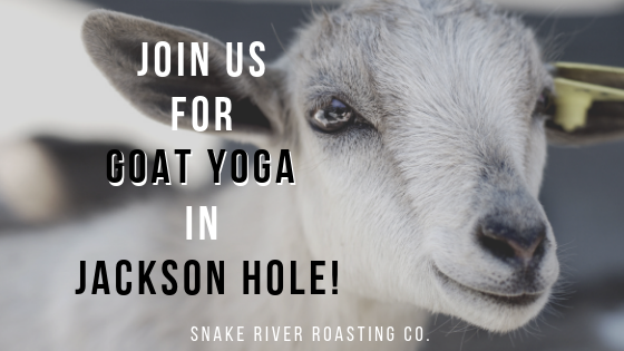 Join Us For Goat Yoga in Jackson Hole!
