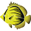 Spiked Butterfly Fish