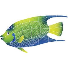 Queen Angel Fish<BR>Click to View