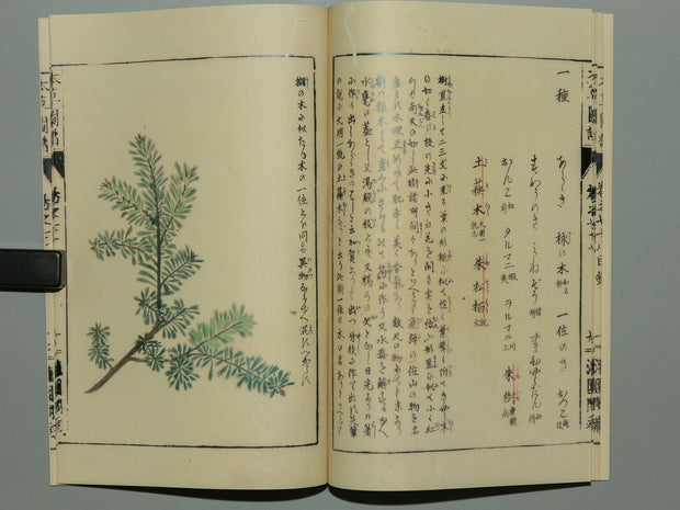 Honzo Zufu Vol.78 / BJ188-972