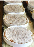 Miliatis Bees - Honeycomb Rounds