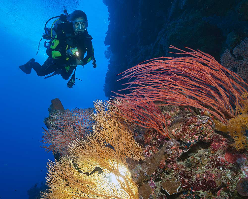 Dive Spirit of Freedom, Great Barrier Reef - 26th to 31st May 2021