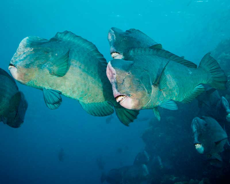 Dive Rowley Shoals - 28th to 6th November 2020