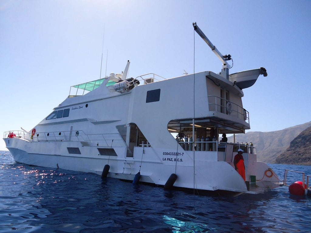 Dive Socorro islands, Mexico - 5th April to 16th April 2021