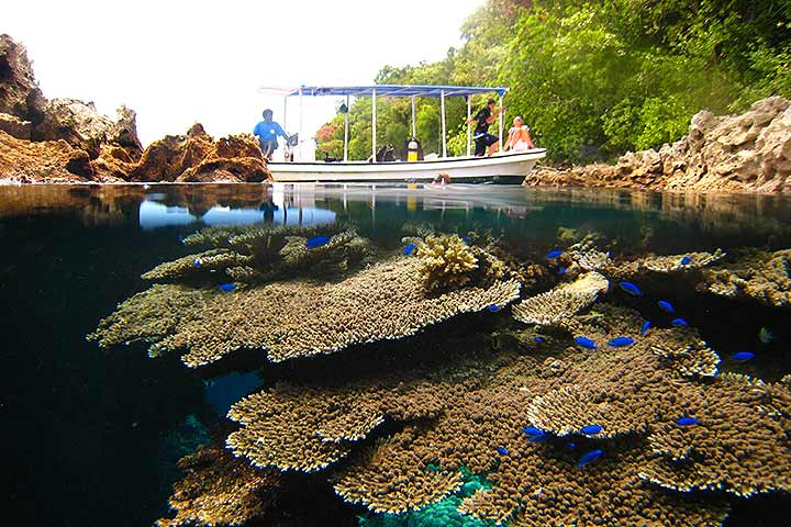 Dive Solomon Islands - Uepi - 2nd to 9th May 2020