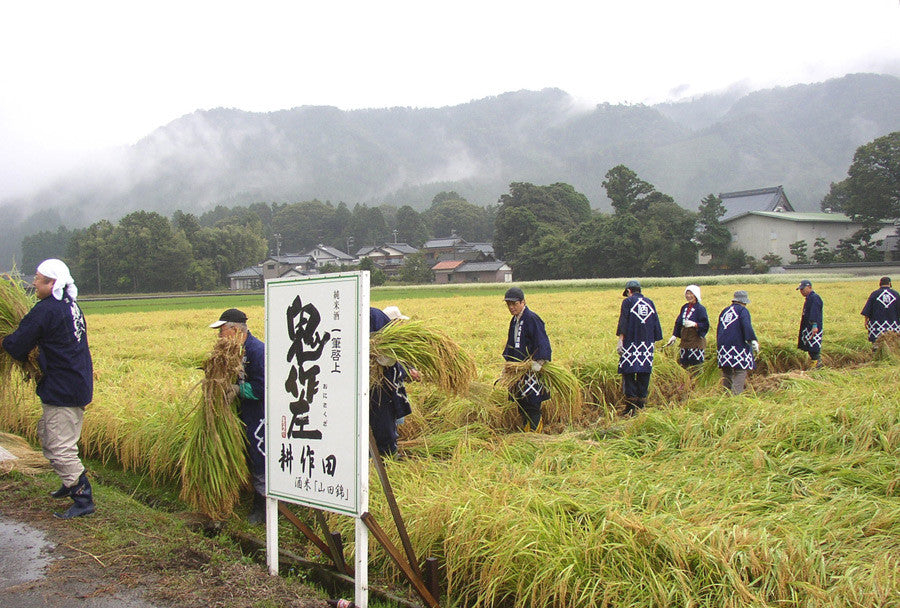 Kubota Shuzo rice fields