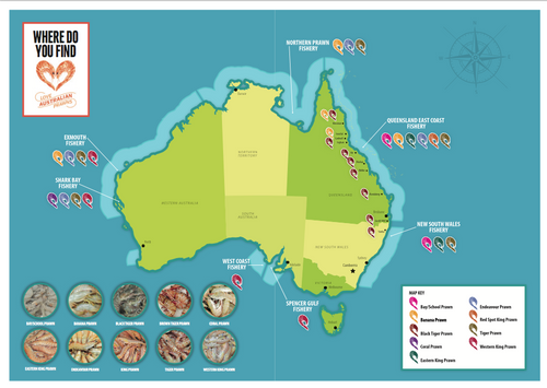 Prawn Provenance Map.