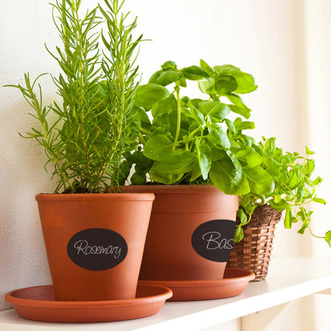 Chalkboard labels on terracotta herb pots.