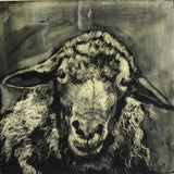Sheep Portrait #2