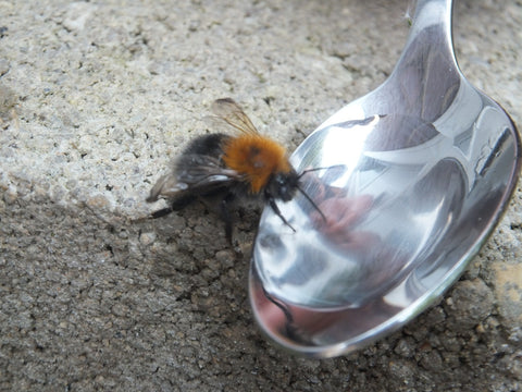 Lottie Doll needs you to save life of Bee in All Ireland Pollinator Plan  support