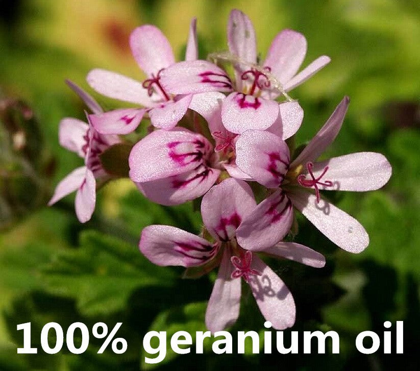 GERANIUM Essential Oil - Capital Elements 2 Wellness and Fitness