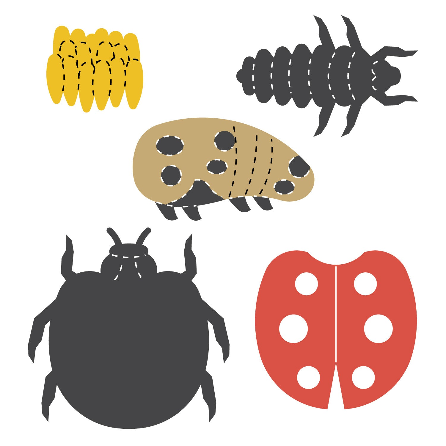 Mini Insect AccuCut Beetle Die Cuts