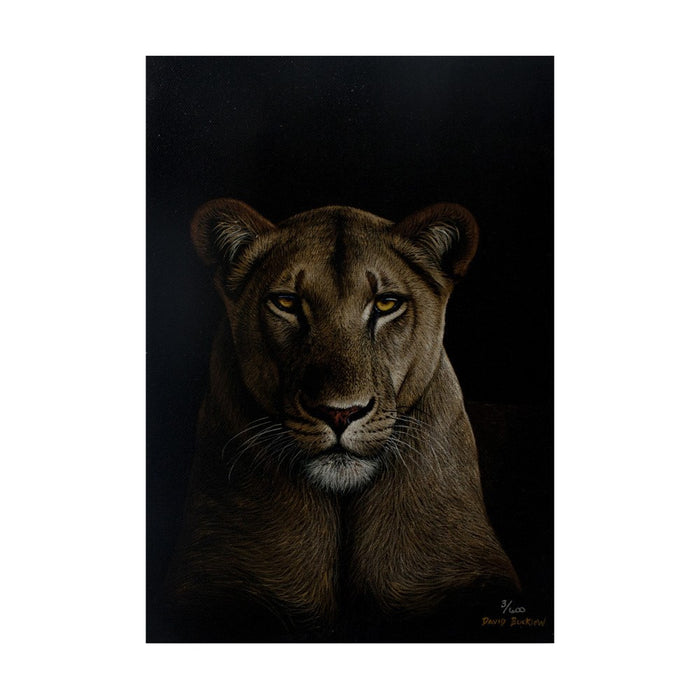 Female Lion Canvas (3/600), Painting - Asili Designs