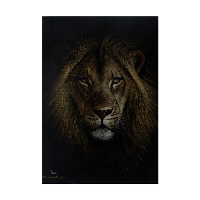 Male Lion Canvas (3/600), Painting - Asili Designs
