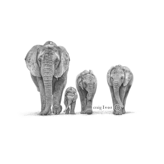 Elephant Herd Pencil Drawing, Painting - Asili Designs