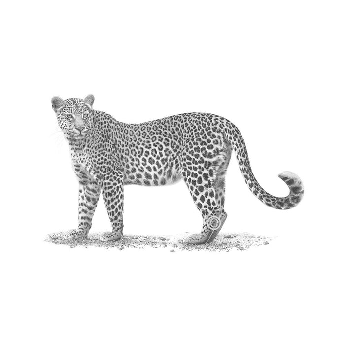 Leopard Pencil Drawing, Painting - Asili Designs