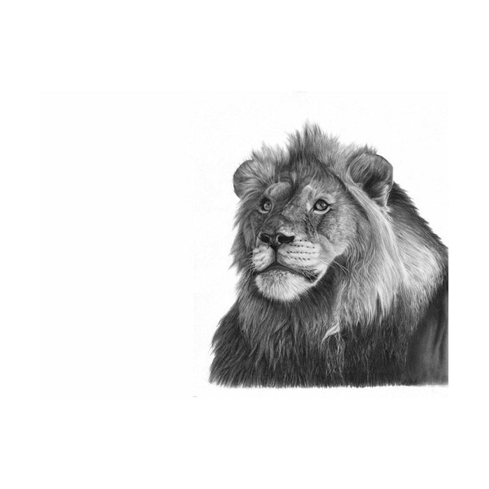 Male Lion Pencil Drawing, Painting - Asili Designs