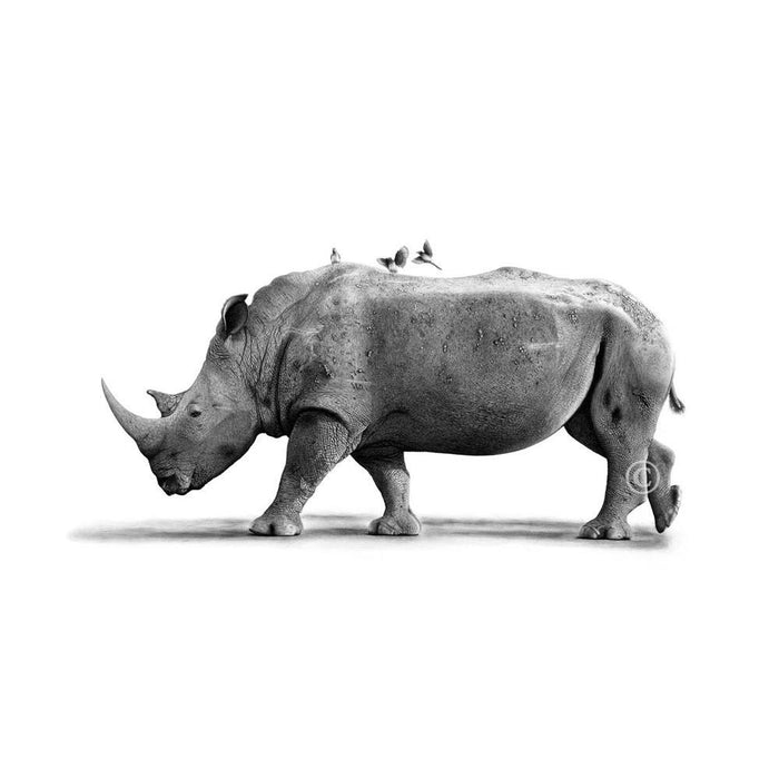 Rhino Pencil Drawing, Painting - Asili Designs