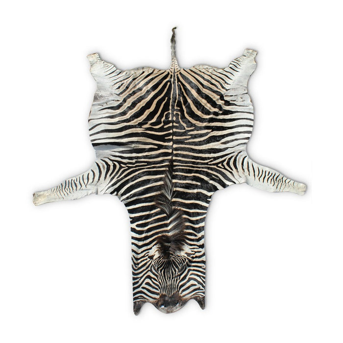 Zebra Hide (A-Grade), Animal Skin - Asili Designs