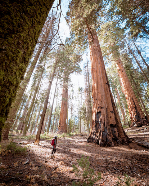 2  feeling stressed  go backpacking  researchers have found it takes about three days totally immersed in nature for parts of the brain to relax and reset  nature does the body good  u2013 coalatree  rh   coalatree
