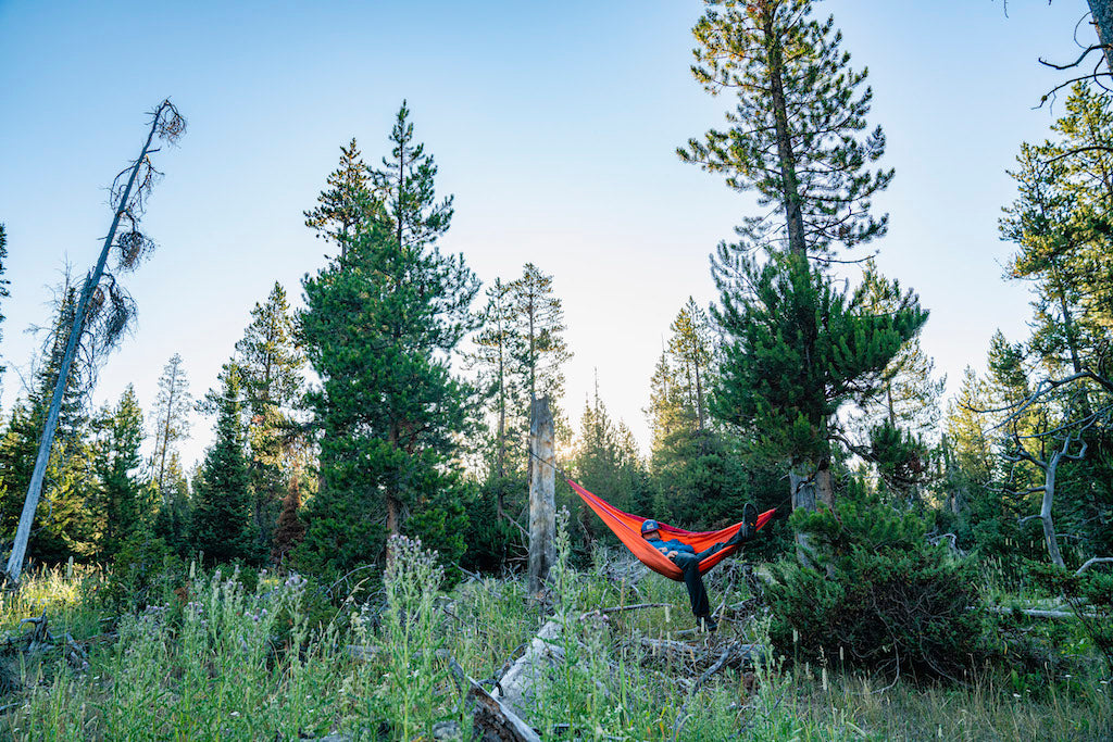 Hammock set up in the trees