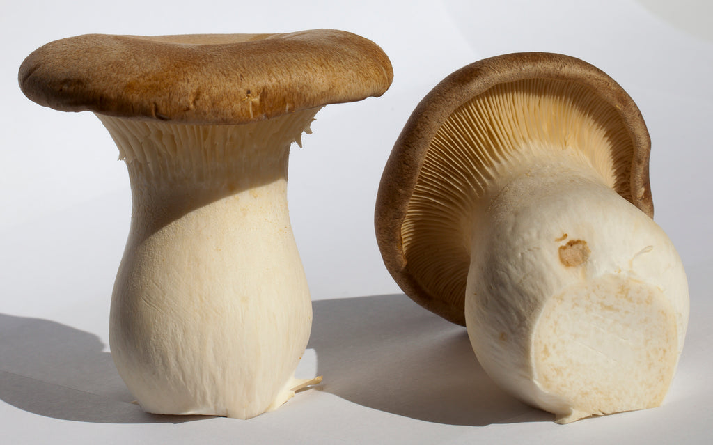 mushrooms improve exercise performance