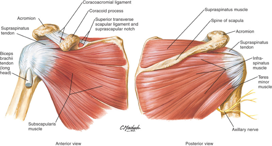 Rotator Cuff Injury  Signs  Symptoms  Causes  And