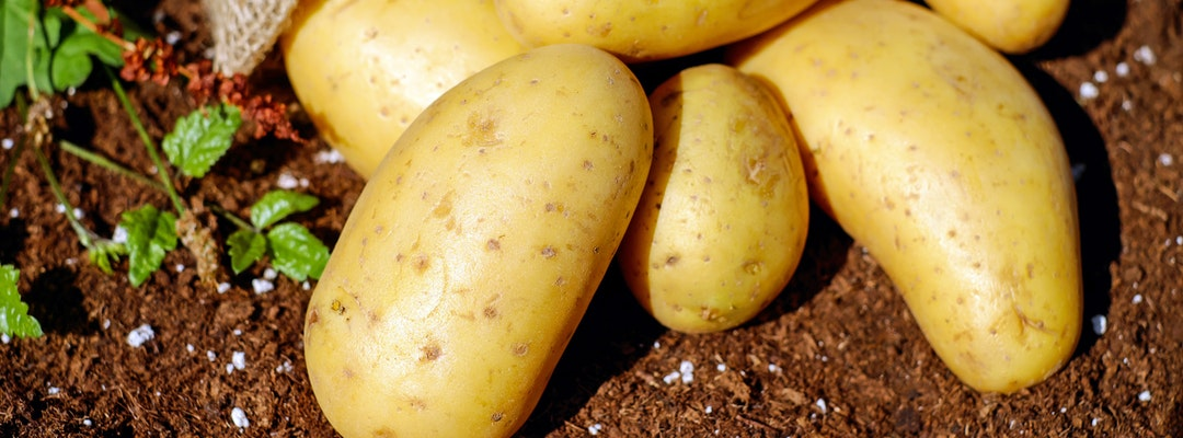 potatoes for energy during exercise