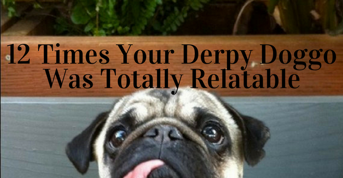 12 Times Your Derpy Doggo Was Totally Relatable