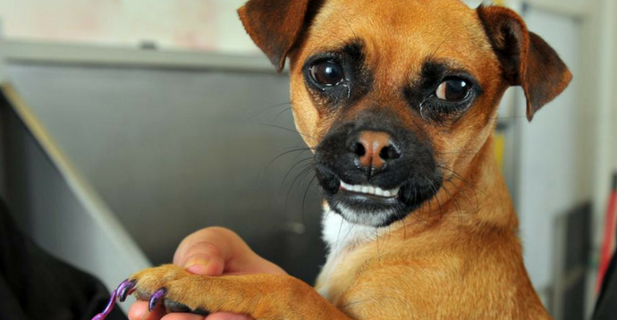 OH NAIL! How to cut your Pup's nails without becoming the Enemy