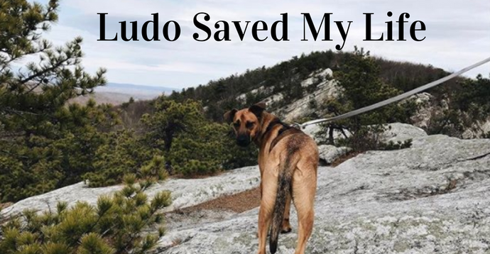 Ludo Saved My Life