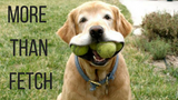 More Than Fetch
