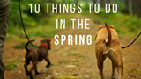 10 Things to Do in the Spring !