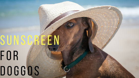 Sunscreen for Dogs!