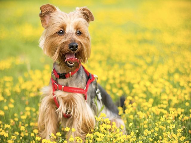 What are the Top April Wellness Tips for Your Dog?