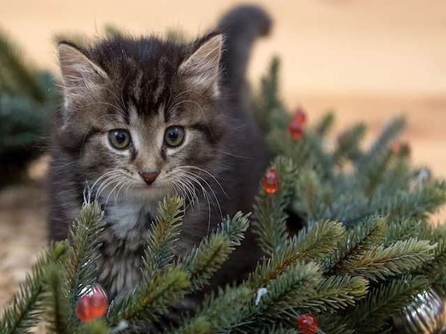 What are Some Ways to Keep My Pets Safe During the Holidays?