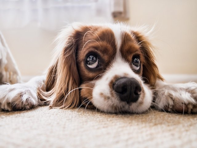 How to Tell if Your Dog has a Toothache