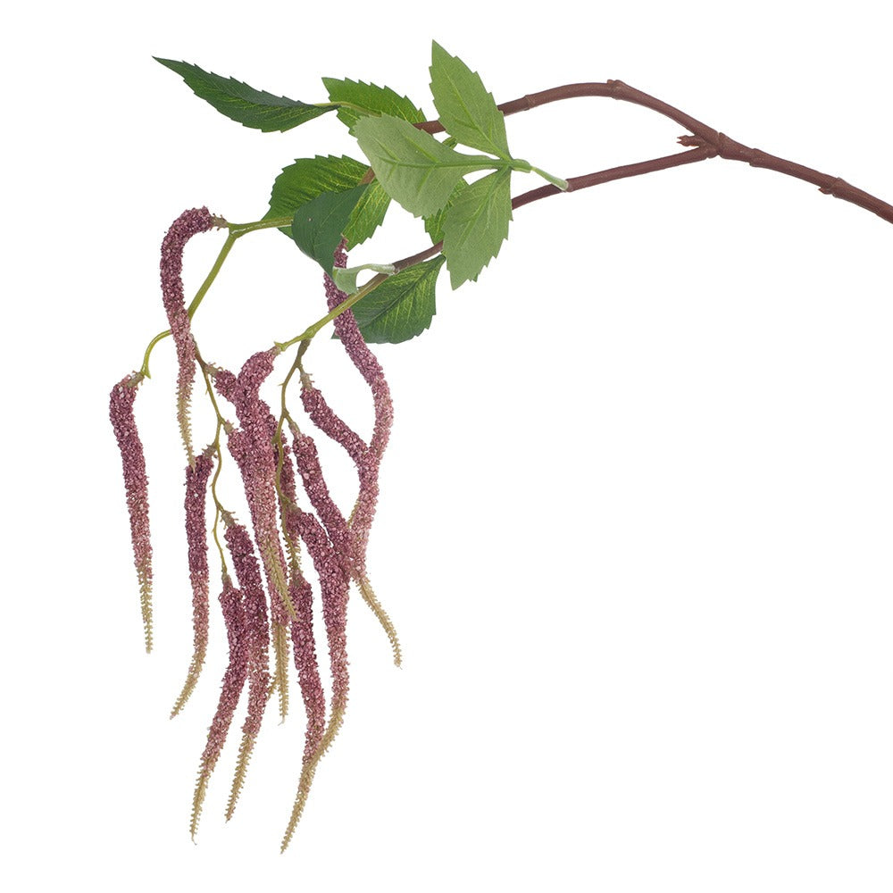 Amaranthus Spray (Pink Stem)