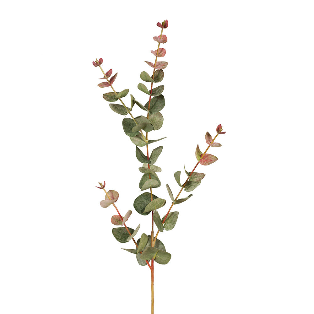 Eucalyptus Silver Dollar (Dusty Green/Red Stem)