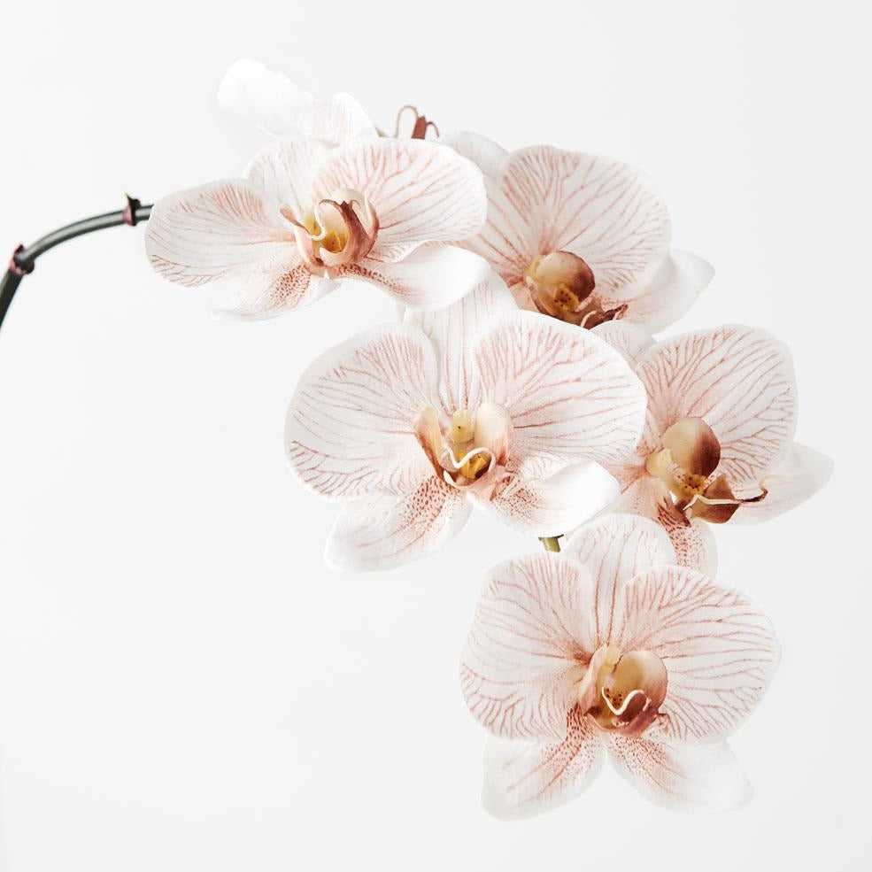 Phalaenopsis Orchid Stem (Infused Natural)