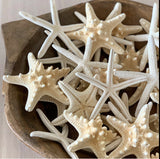 Finger Starfish (Pack of 10)