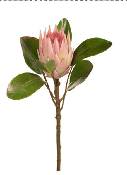Light Pink King Protea (Stem)