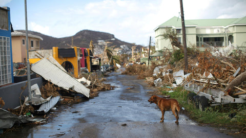 Hurricane damage with a dog standing in the foreground from Quartz.