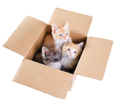 Box of Kittens - Shipping Helpers