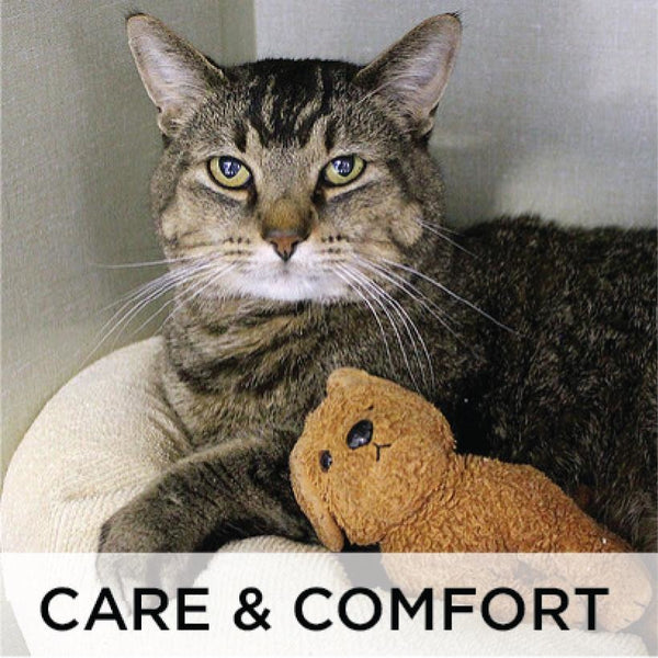 Donate - Care and Comfort