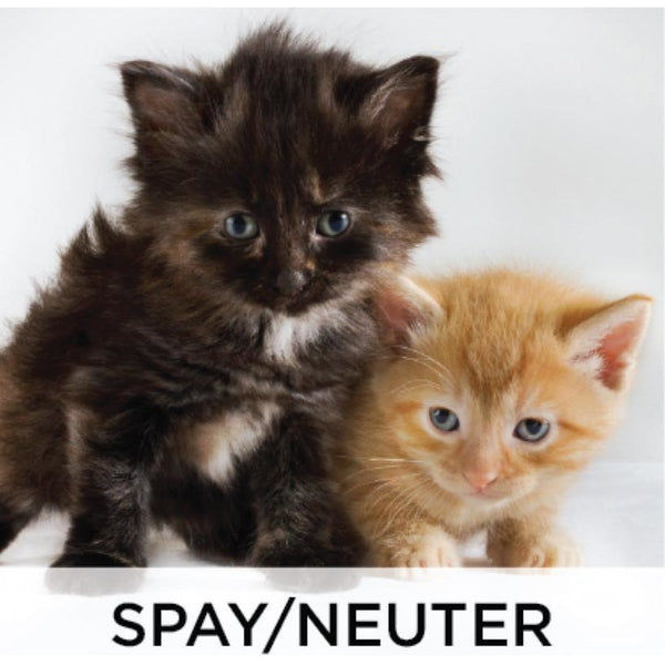 Donate - Spay/Neuter