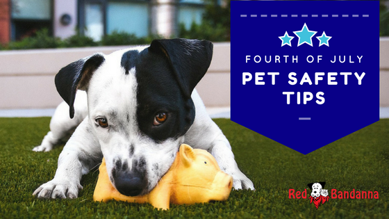 Summer Safety: Fourth of July Tips for Pet Owners