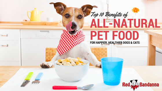 Top 10 Benefits of All-Natural Pet Food