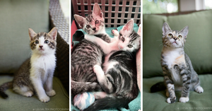 Caturday Adoptions on September 16th!