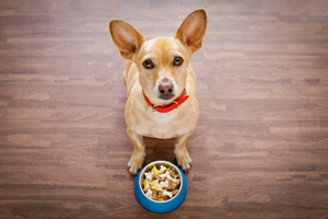 5 Tips for Proper Pet Food Storage